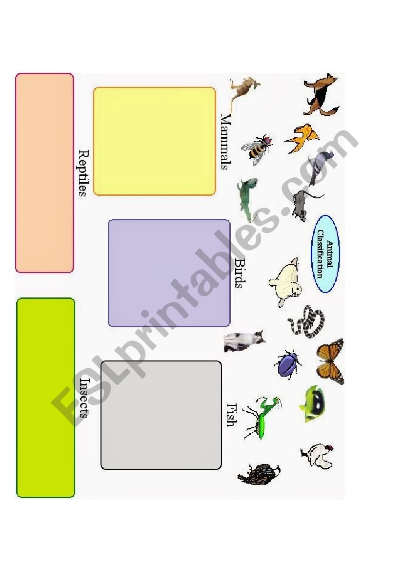Animals classification worksheet