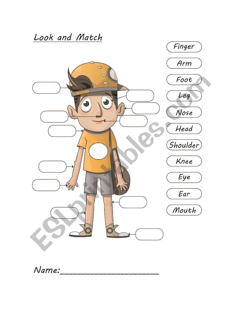 vocabulary-My Body worksheet