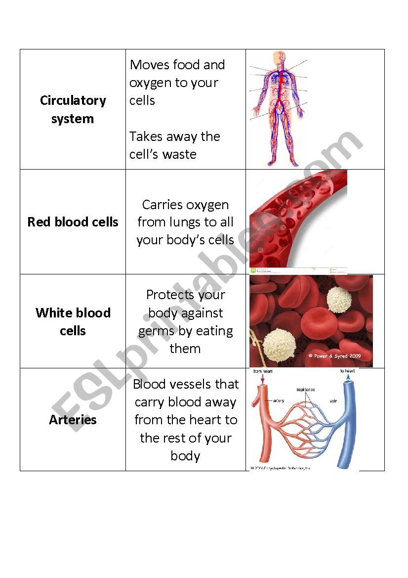 Human Body Systems Flashcards worksheet