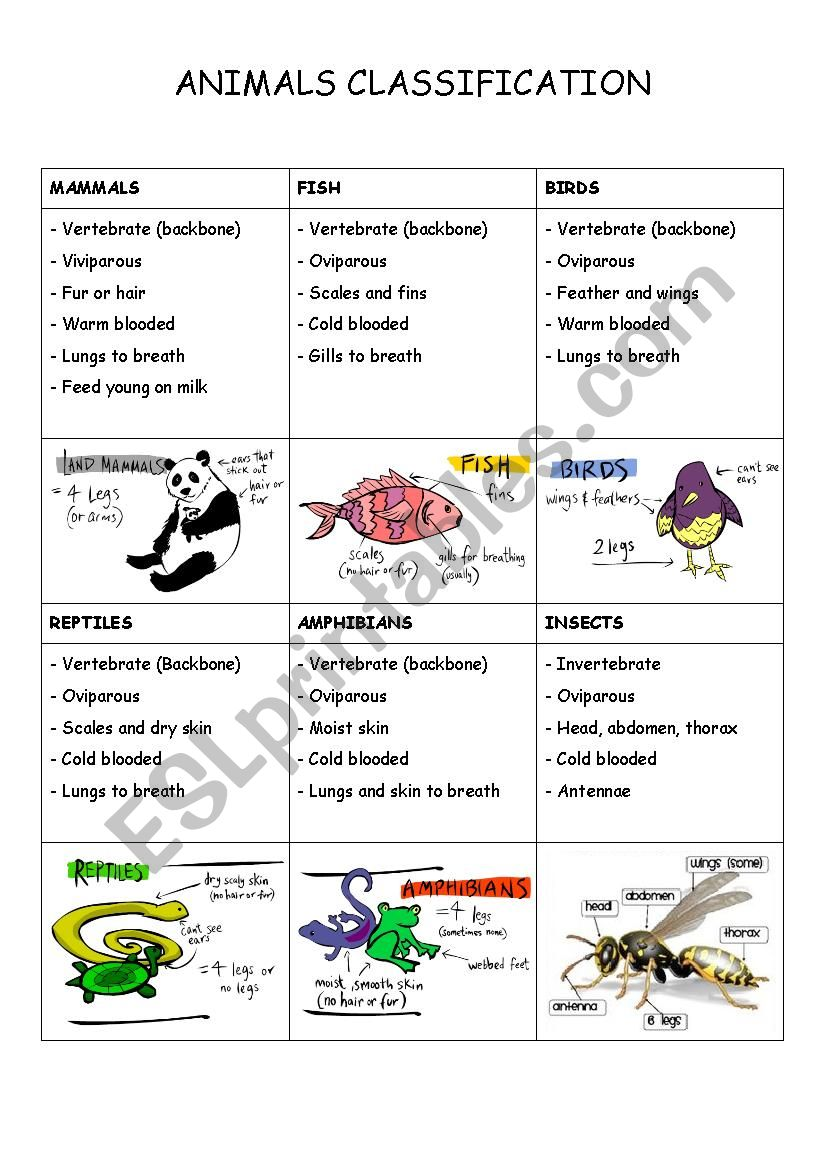 Animal Classification Worksheets Topsimages