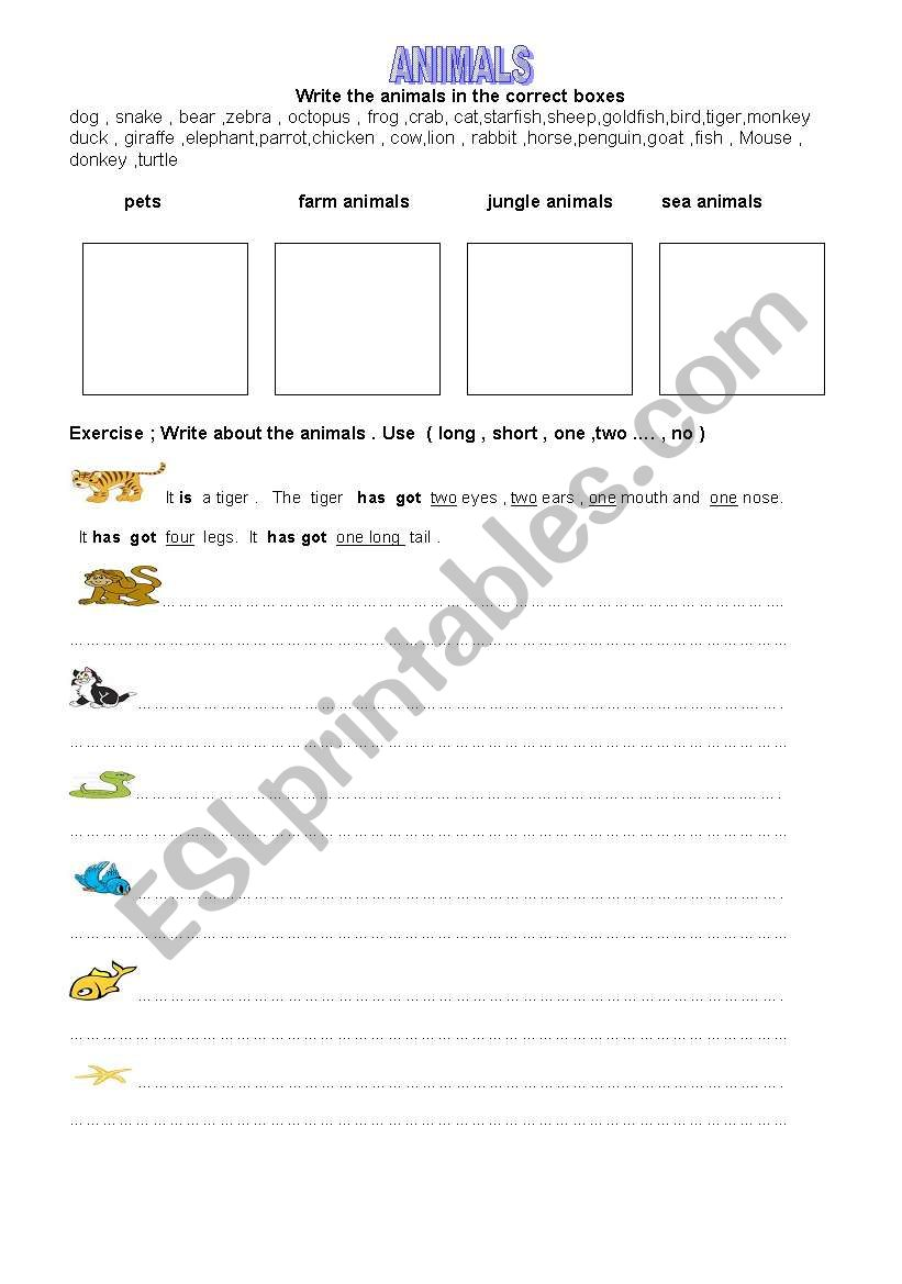 animals -3 worksheet