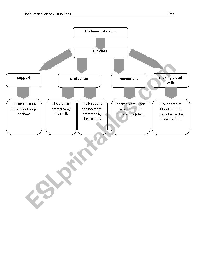 Flow Chart Of The Functions Of A Human Skeleton Esl Worksheet By