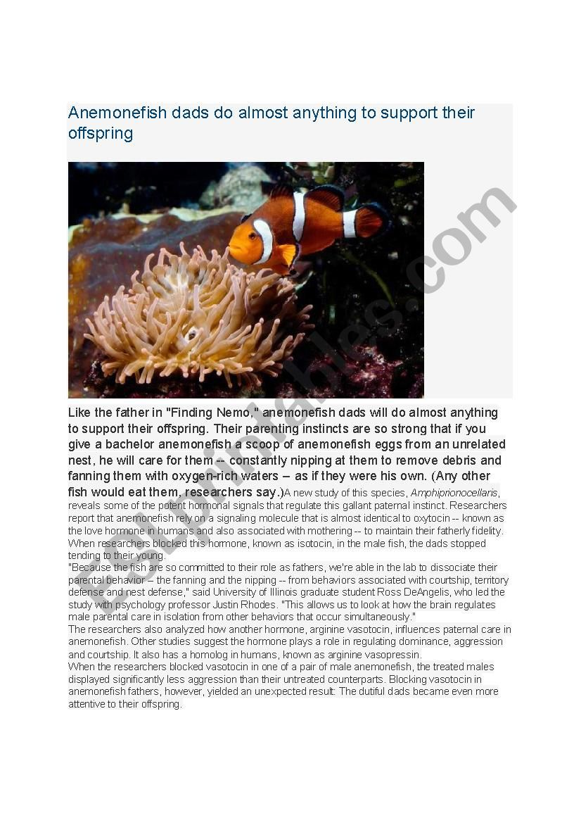 Anemonefish dads do almost anything to support offspring
