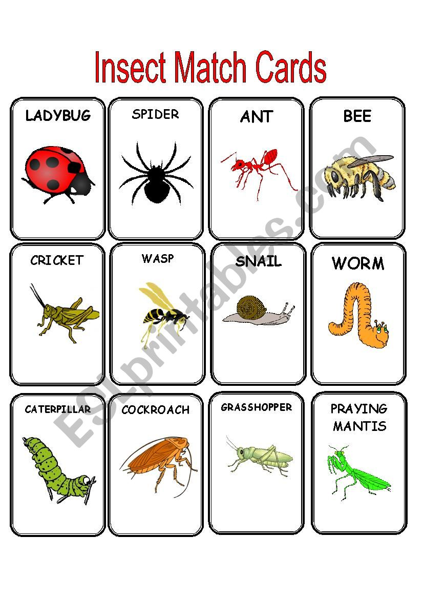 Insect Match Cards worksheet