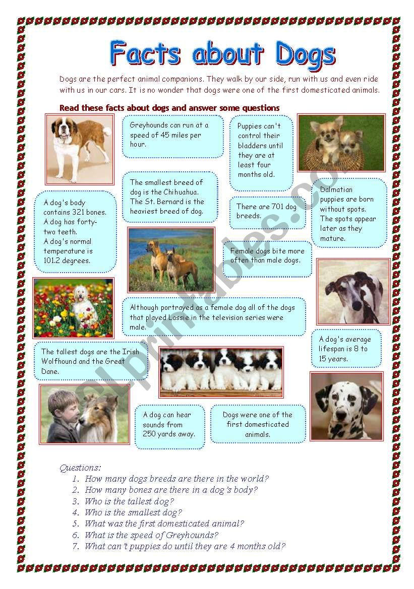 Facts about dogs - ESL worksheet by Makol