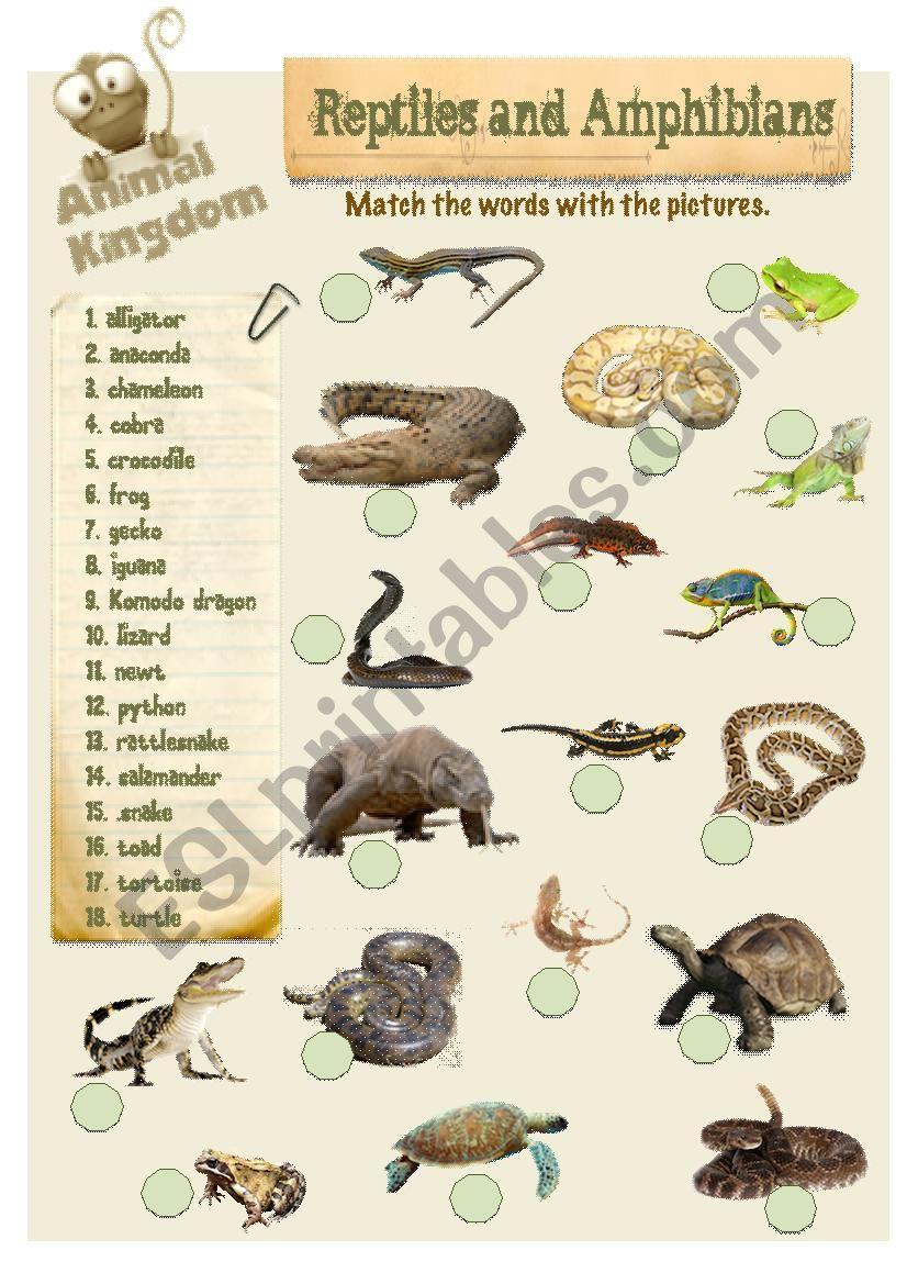 Animal Kingdom - Reptiles (2) worksheet
