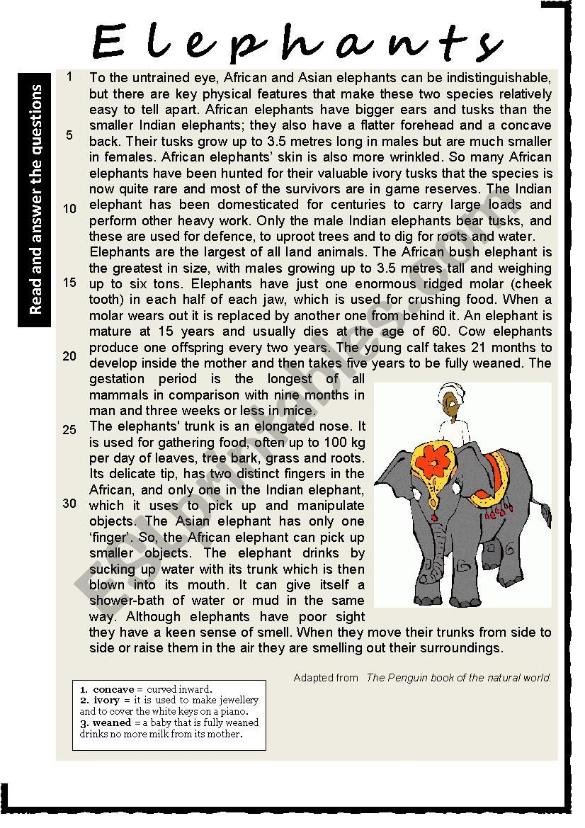 ELEPHANTS. Reading Comprehension. Varied questions and vocabulary work + KEY.