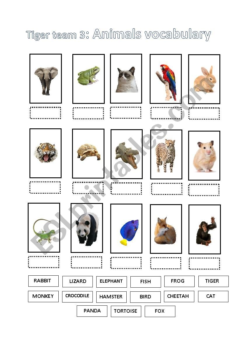 Animals World worksheet