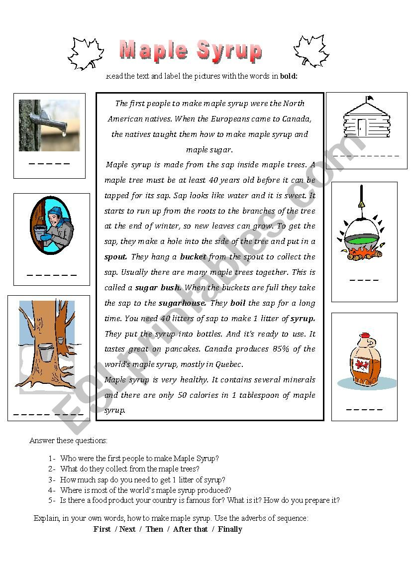 Maple Syrup worksheet