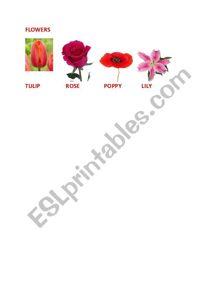 FLOWERS worksheet