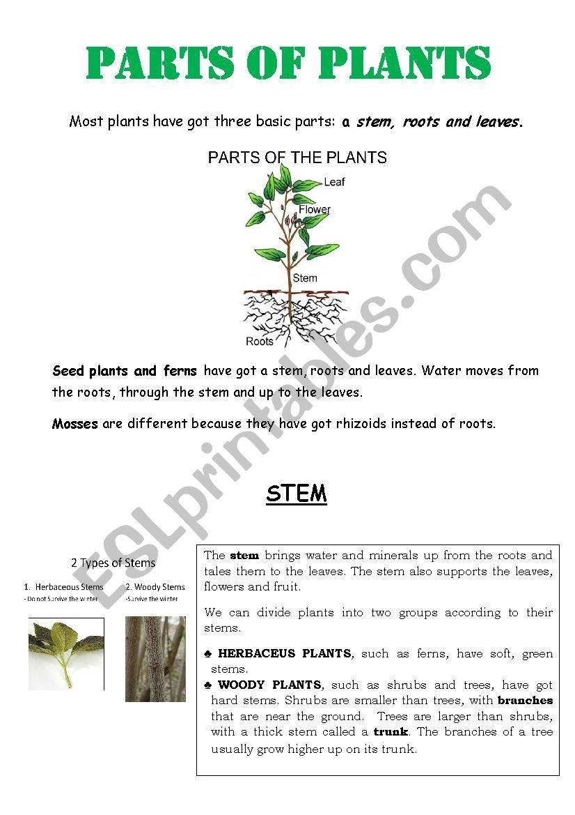 PARTS OF PLANTS worksheet
