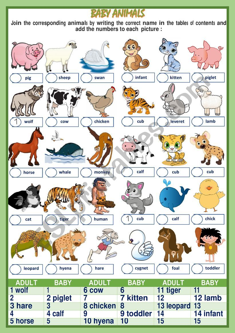 Baby Animals Names 1of 2 Esl
