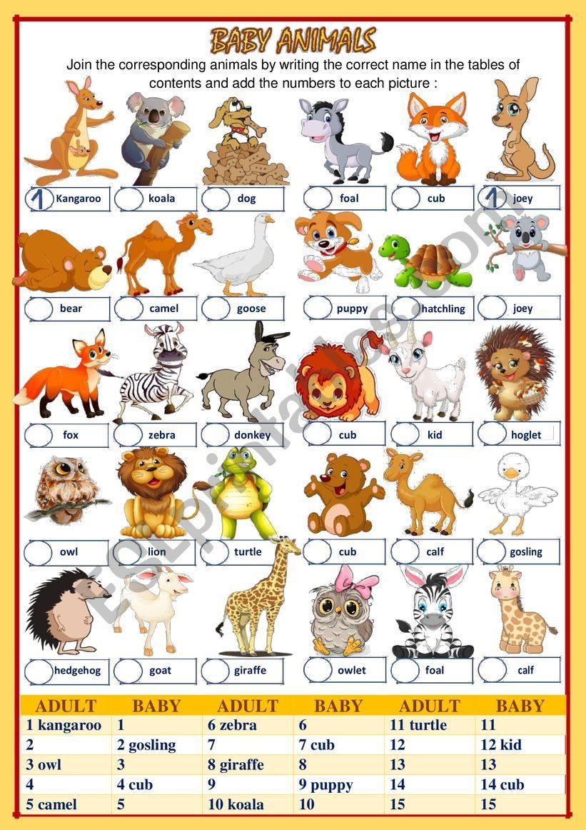 BABY ANIMALS (2 of 2) worksheet