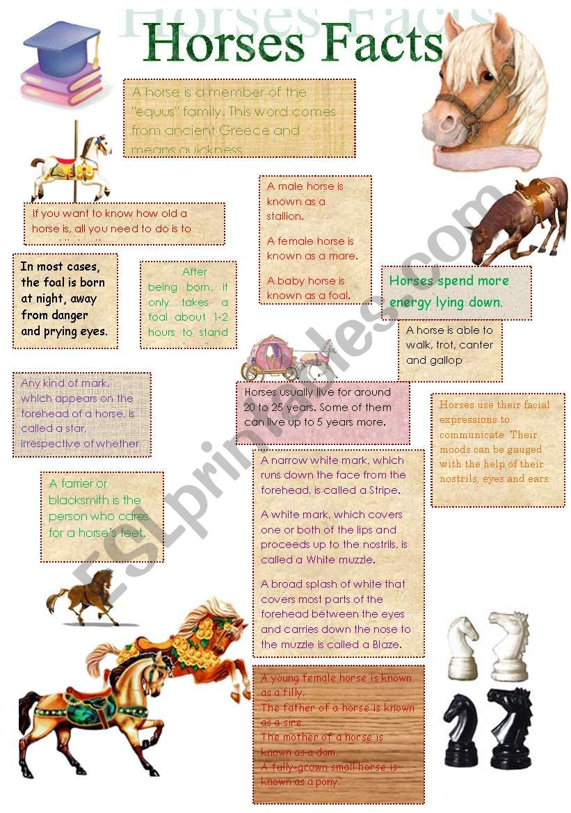 Facts About Horses(14.08.08.) worksheet