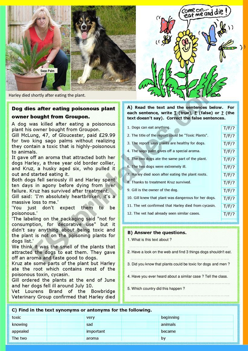 Dog dies after eating a plant. Reading Comprehension + KEY