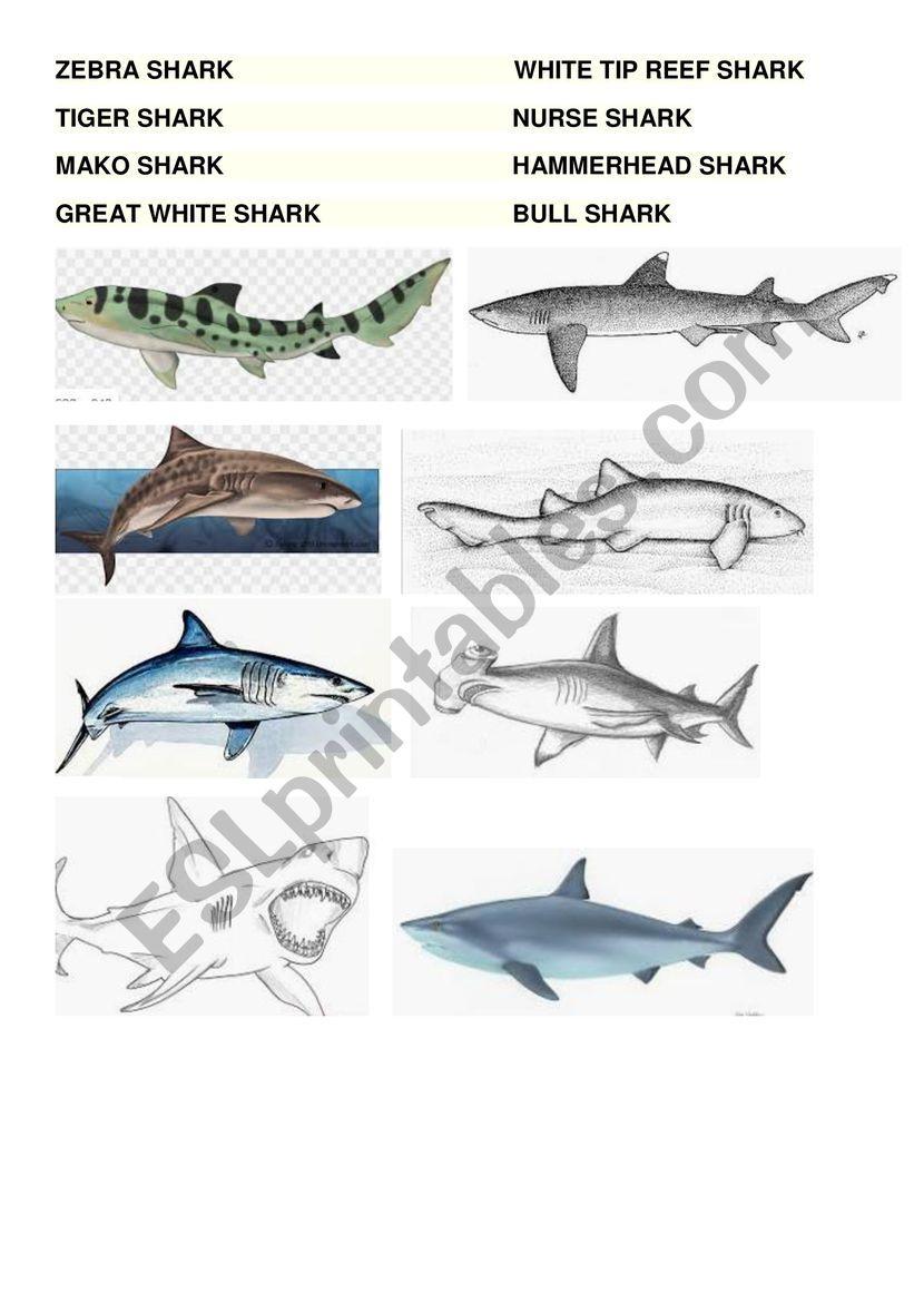 Shark Types worksheet