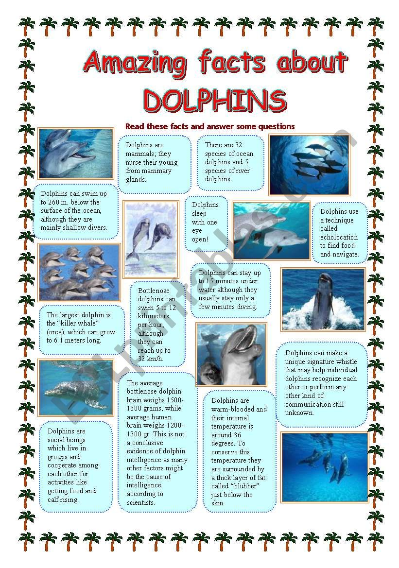 Amazing facts about DOLPHINS - ESL worksheet by Makol