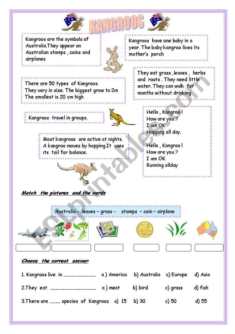 ANIMAL SERIES - 2  ;  KANGROOS , SIMPLE PRESENT ,