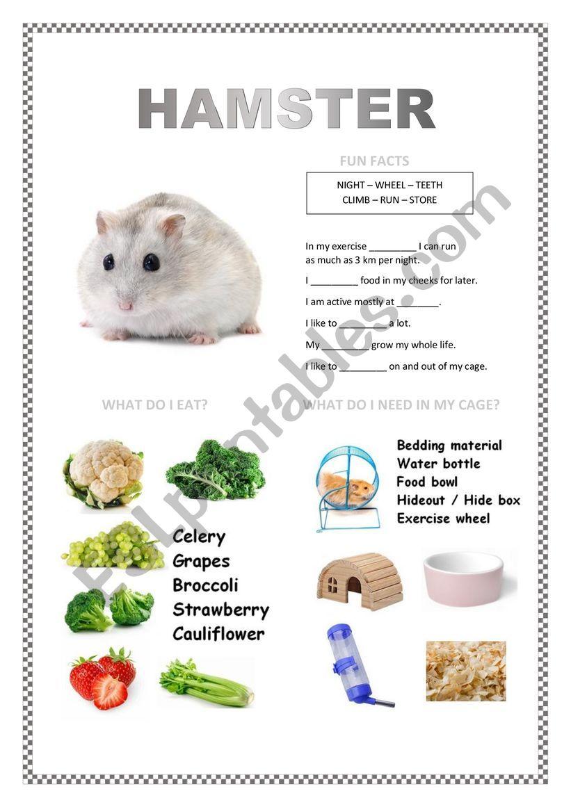 PETS 2 (hamster, fish, turtle, parakeet)