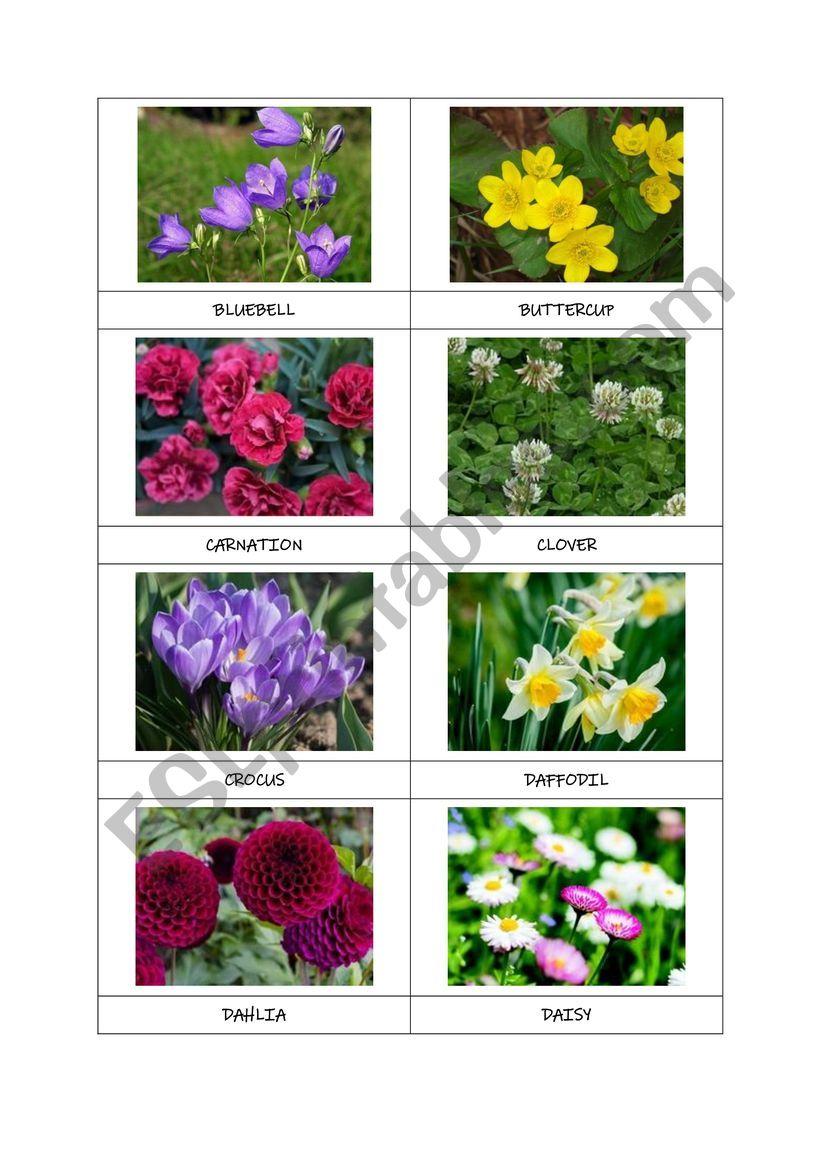 FLOWERS flashcards (part 1) worksheet