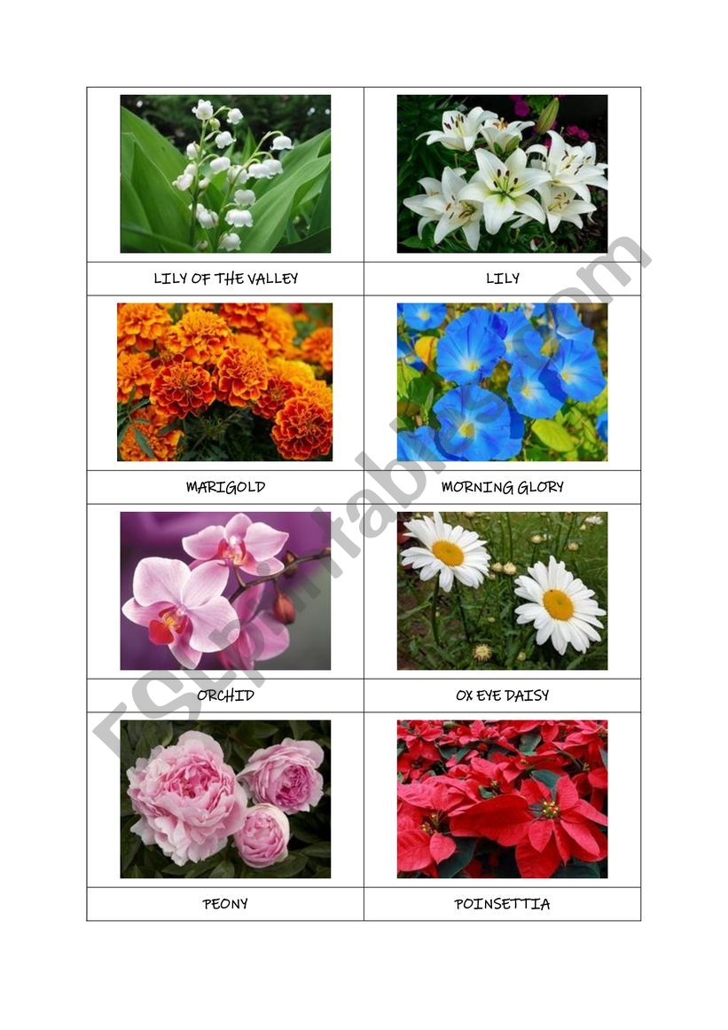 FLOWERS flashcards (part 2) worksheet