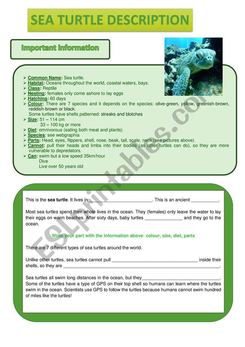 Sea turtle description worksheet