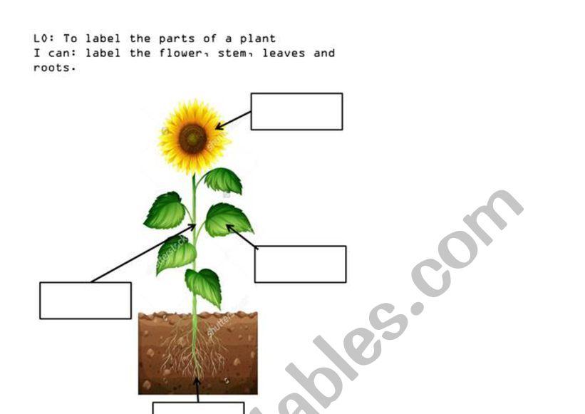 Parts Of A Plant Esl Worksheet By Potatoliu