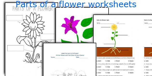 English teaching worksheets: Parts of a flower