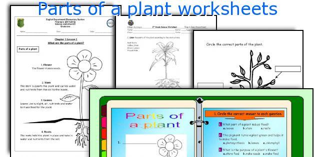 parts of a plant worksheets. Black Bedroom Furniture Sets. Home Design Ideas
