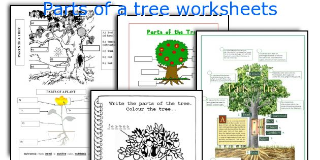 English teaching worksheets Parts of a tree – Parts of a Tree Worksheet