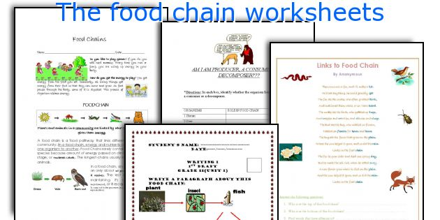 The food chain worksheets