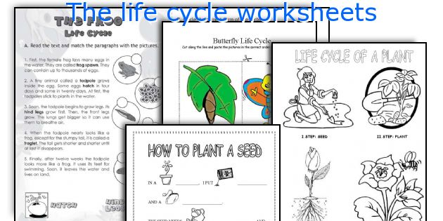 English teaching worksheets The life cycle – Chicken Life Cycle Worksheet