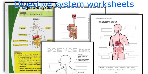 English teaching worksheets Digestive system – The Digestive System Worksheet