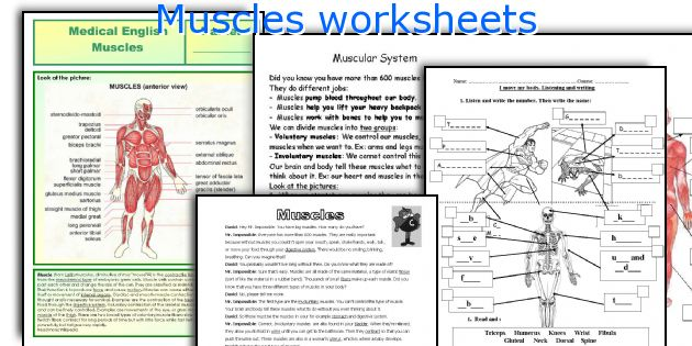 Muscles worksheets