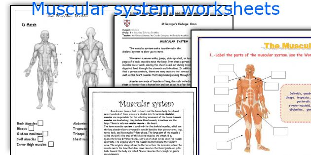 English teaching worksheets Muscular system – The Muscular System Worksheet