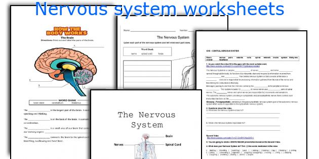 Worksheet Nervous System Worksheet english teaching worksheets nervous system