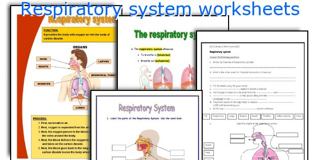 english teaching worksheets respiratory system. Black Bedroom Furniture Sets. Home Design Ideas