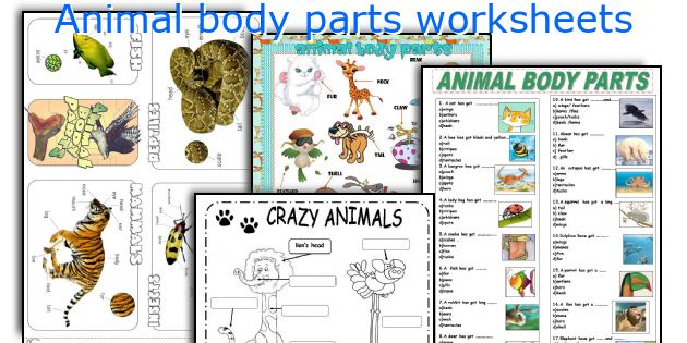 animal body parts worksheets. Black Bedroom Furniture Sets. Home Design Ideas