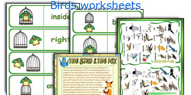 Birds worksheets