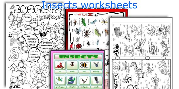 Insects worksheets