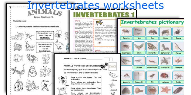 Accomplished image with invertebrates worksheets free printable