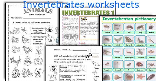 English teaching worksheets Invertebrates – Vertebrates and Invertebrates Worksheets