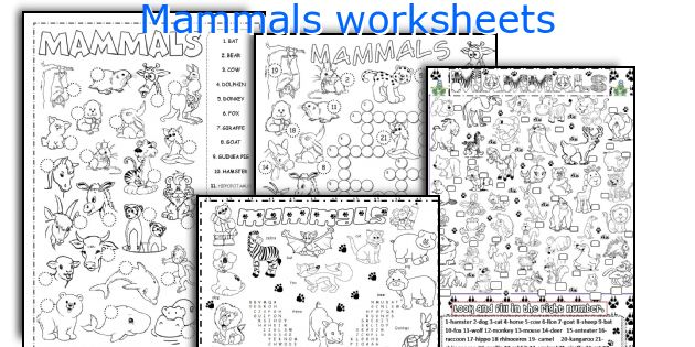 English teaching worksheets Mammals – Mammals Worksheet