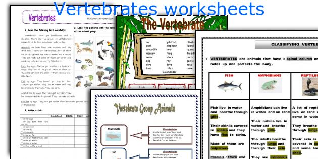 English teaching worksheets Vertebrates – Vertebrate Worksheet